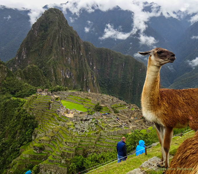 Peru 2017-02634.jpg