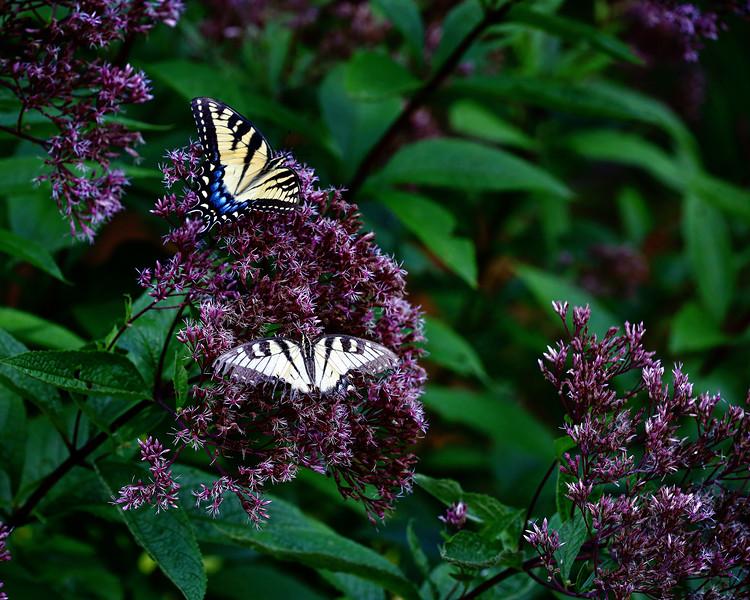 Hidden View (butterfly)-79.jpg