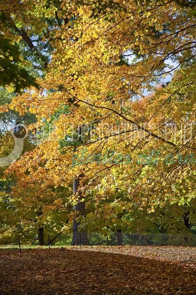 Fall-Foliage_batch_batch.jpg