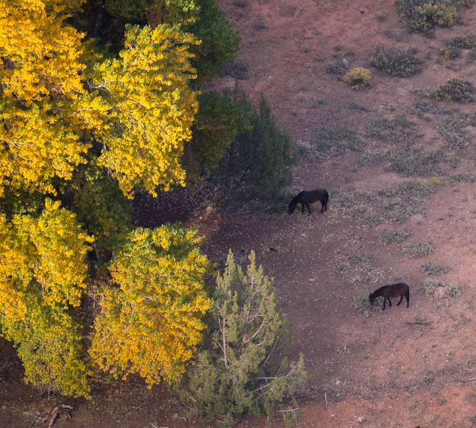Horses in Canyon De Chelly