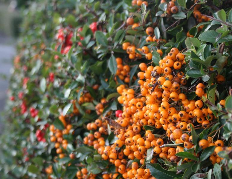 berries 2 - Copy.jpg