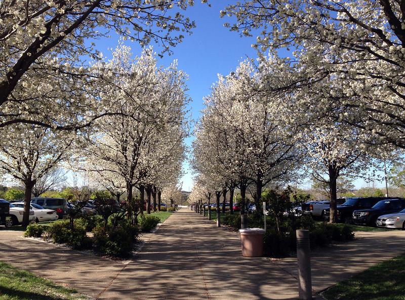 roseville bloom.jpg
