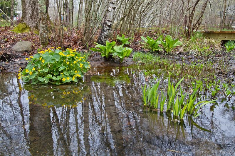 in the Wild Gardens of Acadia