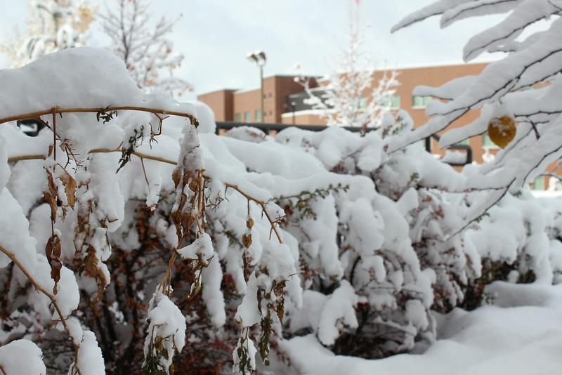 Snowy_Morning_11_10_2012_3306.JPG
