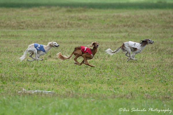 Pack Coursing 2016