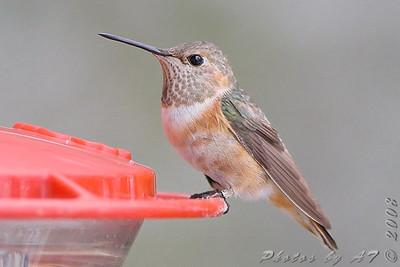 2008 Birding
