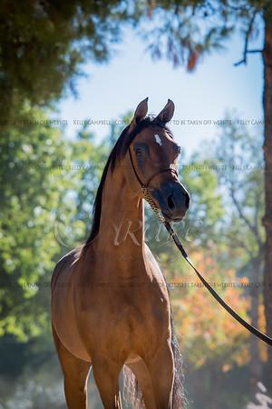 JR's DReam Arabians