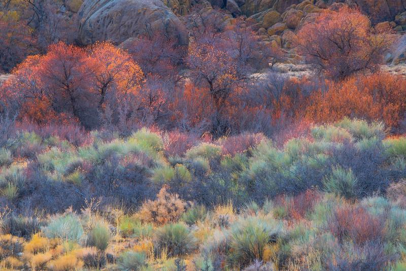 Cali Grass 3 copy.jpg