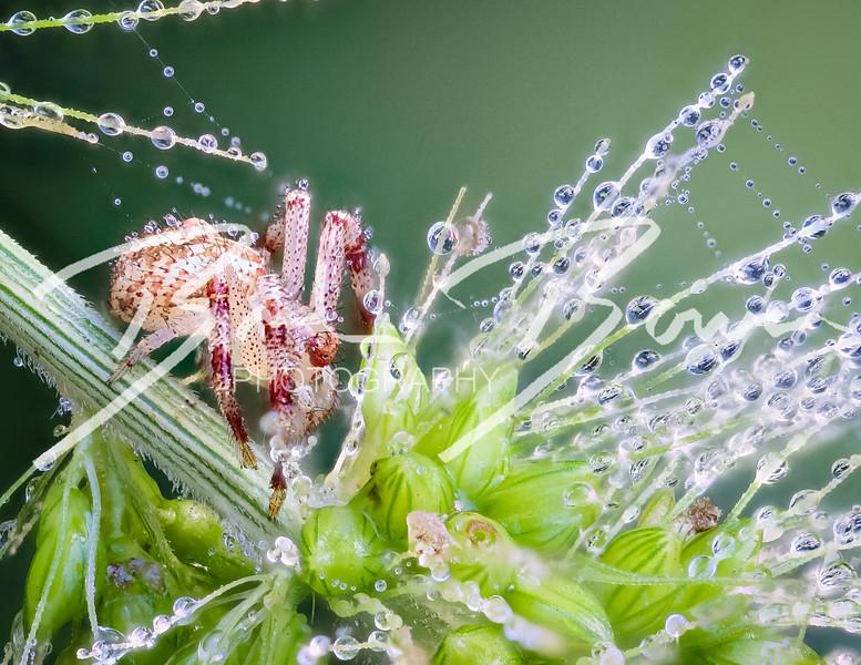 spiderweed-1.jpg