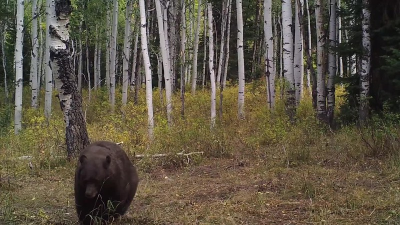 Tips to Prevent Black Bear Encounters