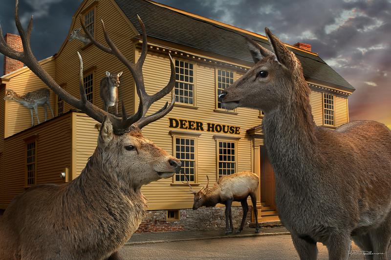deers-house.jpg