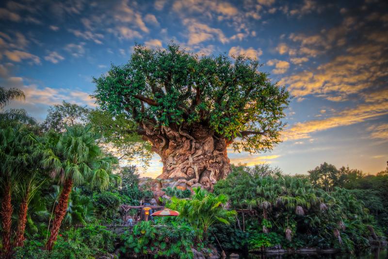 Animal Kingdom: The Tree of Life