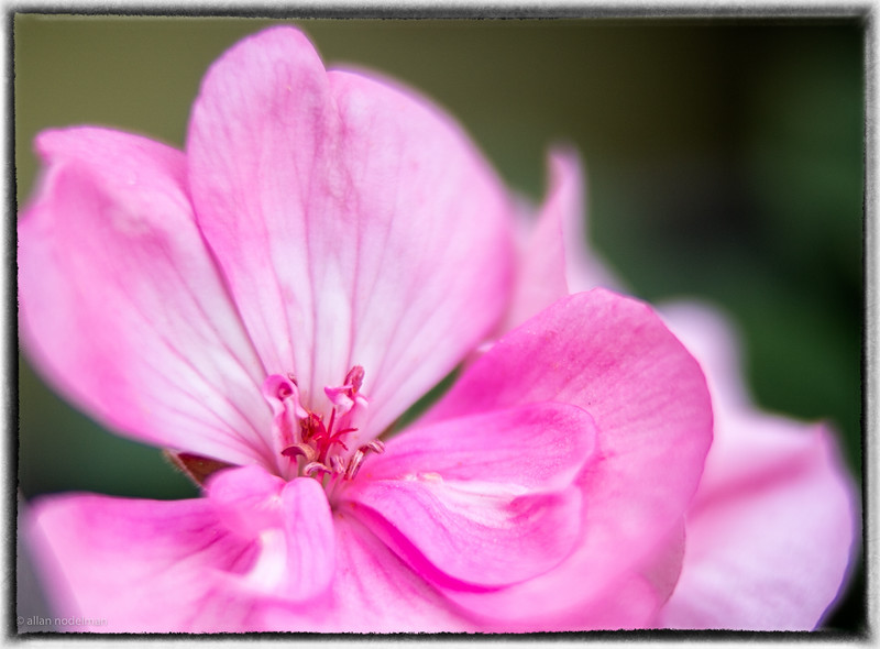 Trying Out Extension Tube in Garden
