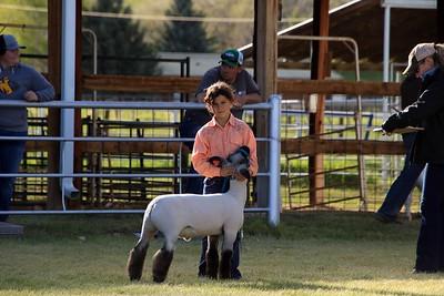 Supreme Sheep Showmanship
