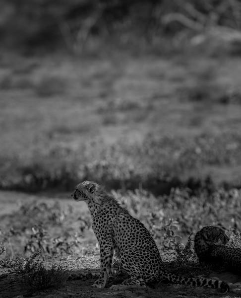 Tanzania_Feb_2018-68.jpg