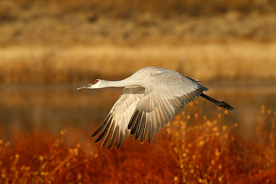 Bosque del Apache Workshop