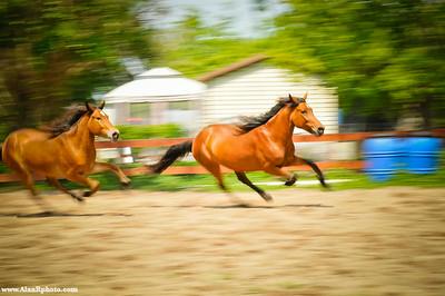 Rosaire's Horses Video