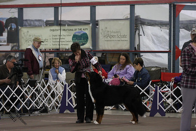BMDCA 2012 9-12 mo Dog
