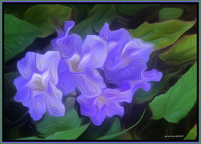 DIGITAL-CREATIVE-MASTER-SILVER-PAINTED VIOLET BENGAL TRUMPETS-ROBERT MILLER