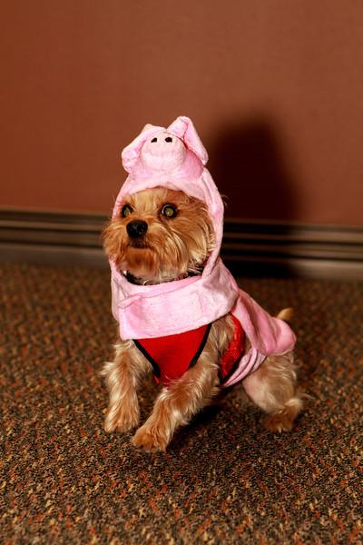 Pet Halloween Photo Contest - 2014