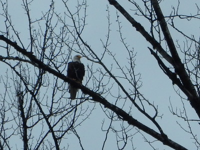Skagit River Eagle Float Jan 7, 2017
