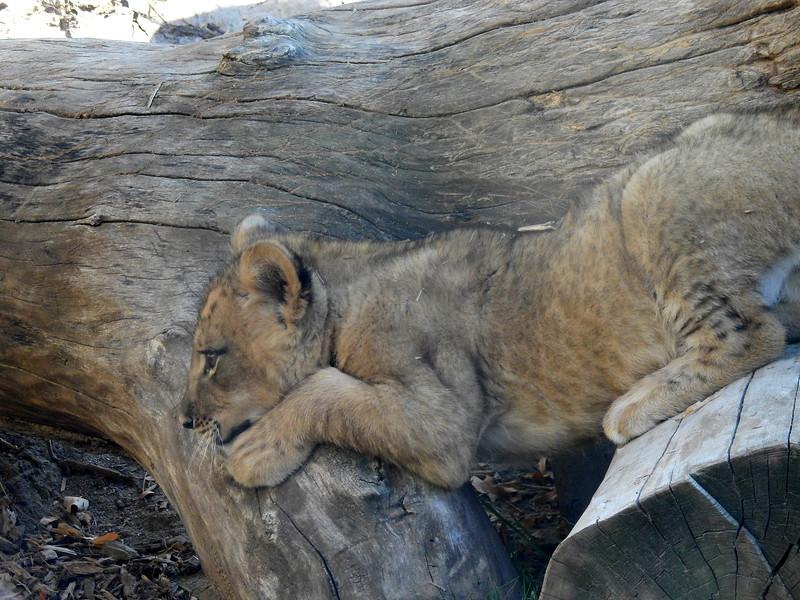 Denver Zoo 2019 (1337).JPG