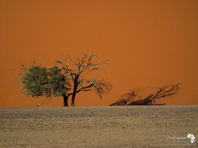 Namibia 2016 Scenes