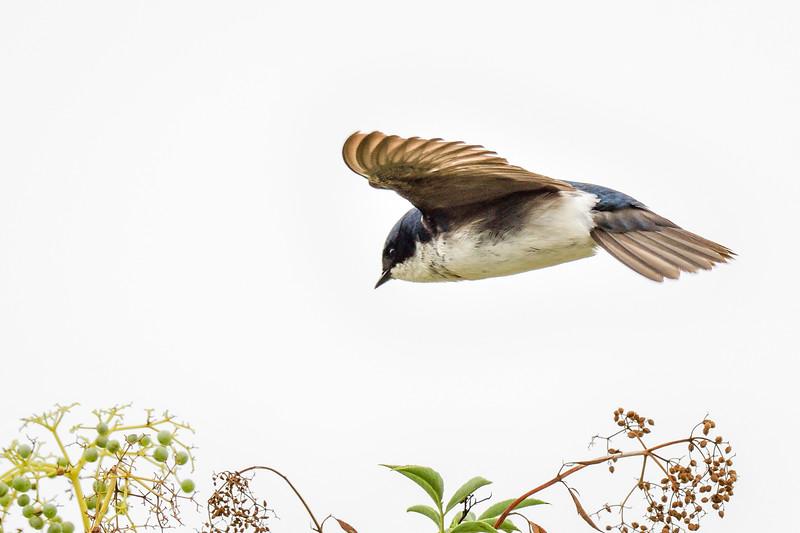 Audubon Society Sea and Sage, Irvine, CA USA
