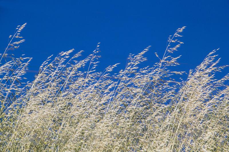 Blowing in the Wind - Judith Sparhawk