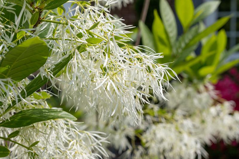 180512_47_6321_Flowers-1.jpg