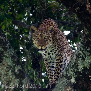 Kenya March 2010