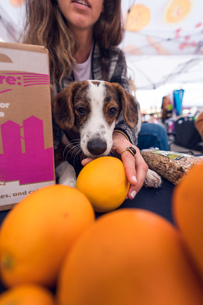 Grossmont Center San Diego Made Pop-Up Market at HolidayFest-23.jpg