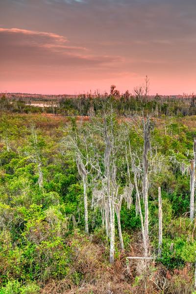 Okeefenokee Swamp 2020-4.jpg