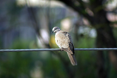 Random birds