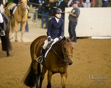 41 Hunter Hack Horses