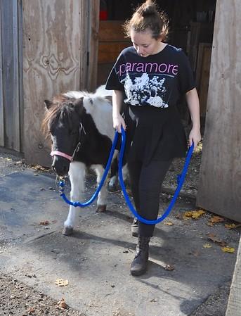 Bonnie goes to Sunshine Farm Nov 2015