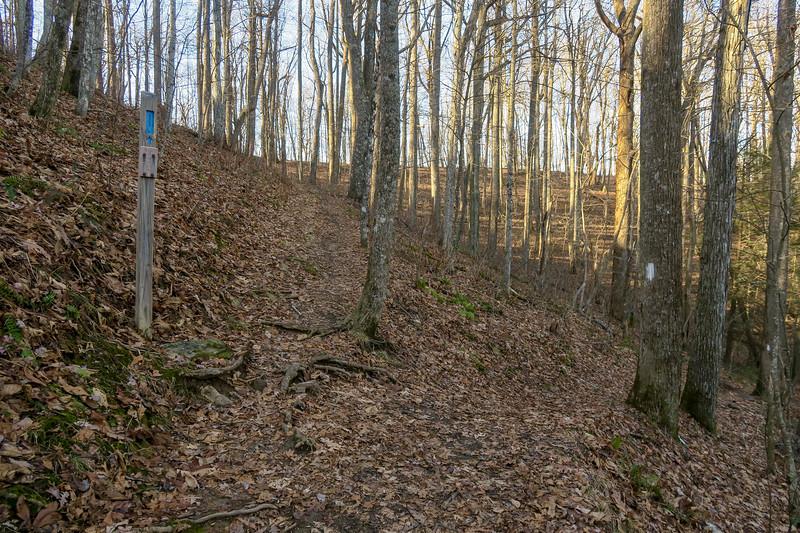 Appalachian/Rich Mountain Spur Trail Junction -- 3,500'