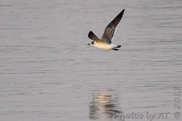 2013-10-28 Riverlands Migratory Bird Sanctuary