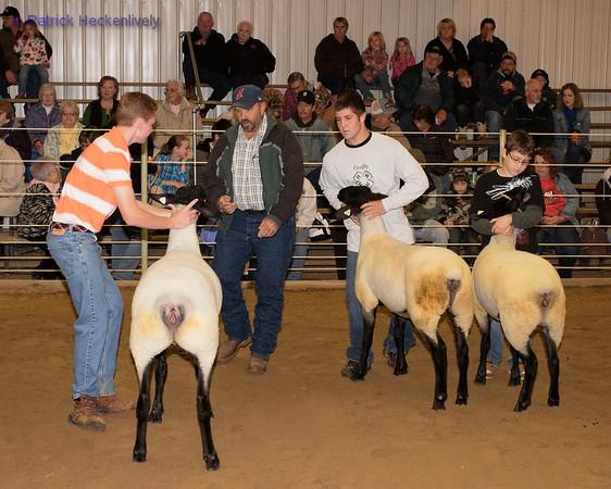 2010-09-27 Sheep 0900-1000