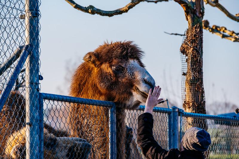 Tonis Zoo-0204.jpg