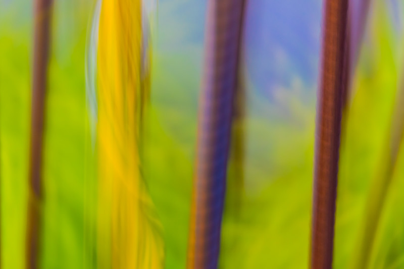 Abstract vertical lines break up a background of green and blue