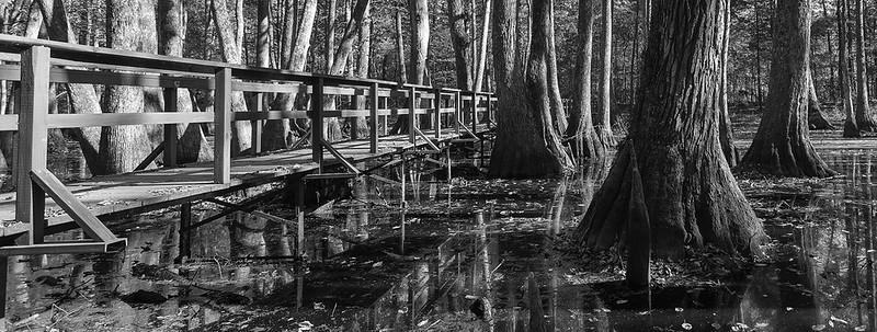 Cypress Grove 3.jpg