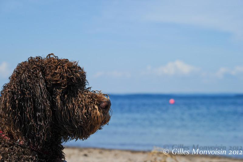 Beauregard at the beach