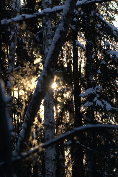 The Forest Through The Trees