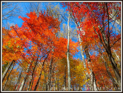 Great Smoky Mountains National Park Cataloochee Valley 10-2016