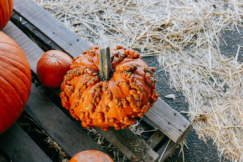 crazy pumpkin (1 of 1).jpg