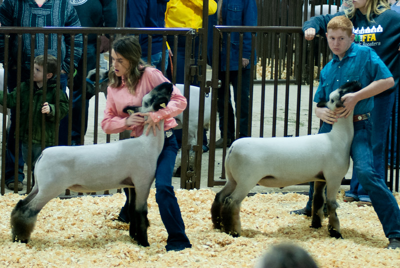kay_county_showdown_sheep_20191207-75.jpg
