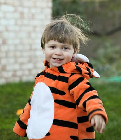 Pumpkins, tigers, grandparents, oh my!