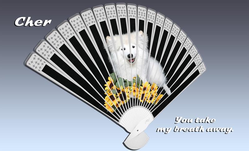Cher-Daisies-Fan-4.jpg