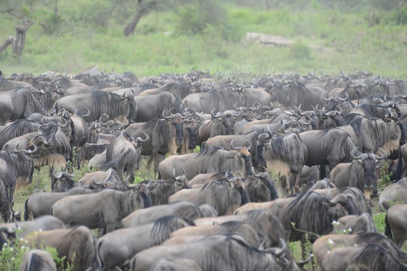 East Africa Safari 266.jpg